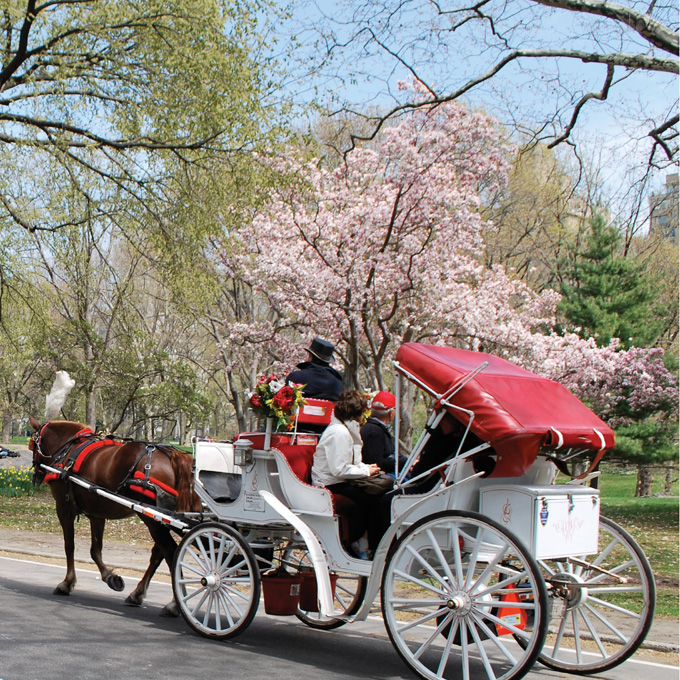 Iconic Central Park Horse Carriage Ride