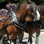 Horse Carriage Tour for 6 in Austin
