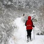 Snowshoeing Tour in Salt Lake City