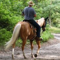 Soldier Hollow Horseback Riding in Salt Lake City