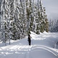 Cross-Country Ski Tour for 2 in Salt Lake City