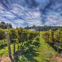 Learn about Wine in Washington DC