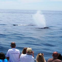 Newport Beach Whale Watching