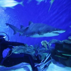 Dive with Great White Sharks in Orange County
