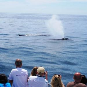 Los Angeles Whale Watching in Orange County