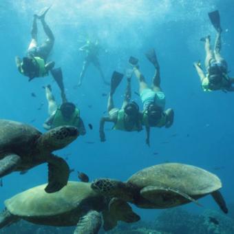 Snorkel with Hawaiian Green Sea Turtles in Oahu