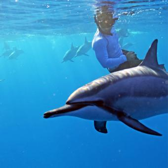 Swimming with Dolphins in Hawaii