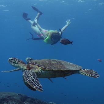 Snorkeling Tour in Hawaii