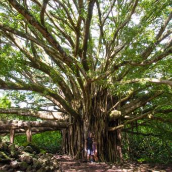 Couple and a Magical Hana Tree