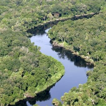 Little Manatee River Helicopter Tour (for 2+) in Tampa