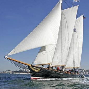 Sailing Yacht America & Whale Watching Experience in San Diego