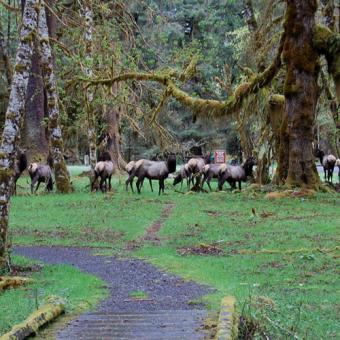 olympic-national-park-tour-wildlife