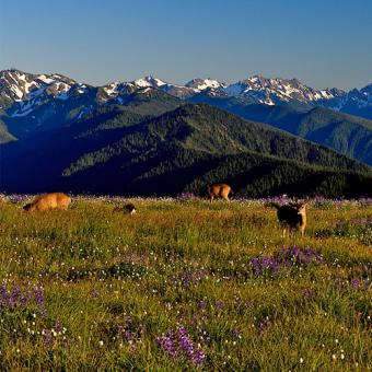 olympic-national-park-tour