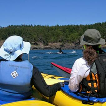 "Join your guide for a fun, informative two day sea kayak and whale watching tour on the west side of San Juan Island.You'll use San Juan County Park as your base camp for kayaking and exploring on this two day adventure.The pristine waters of the San Juan Islands and Gulf Islands are host to over 85 resident Orca Whales and other wildlife. Sea Kayaking on the Haro Strait, the body of water that separates San Juan Island from Vancouver Island, puts you right in the heart of the best whale habitat on the west coast for seeing resident Orca whales.Resident Orca populations are organized into stable, highly social matrilineal family groups called ""pods."" Known collectively as the ""Southern Residents"", they return regularly to the west side of San Juan Island during the Summer months to take advantage of strong currents and optimal fishing for Chinook salmon.In addition to seeing whales, you will also have the opportunity to view brightly colored orange and purple s"