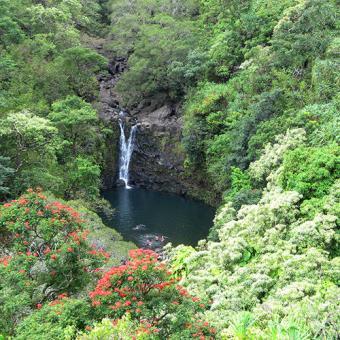 Rain Forest Adventure in Hawaii