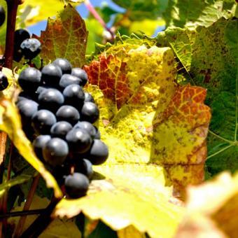 Private Vineyard Tasting Tour & Picnic in New York
