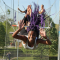 New York Trapeze Class