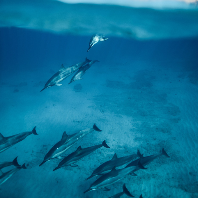 Dolphin Snorkel Tour in Oahu