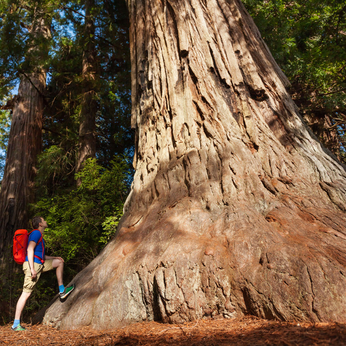 Giant Sequoia Tree - Yosemite National Park Tour