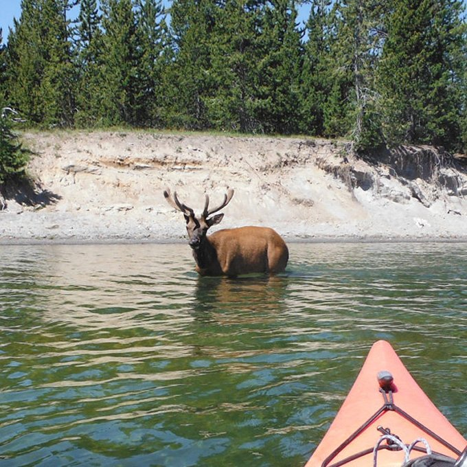 Spot the Wildlife from a Kayak