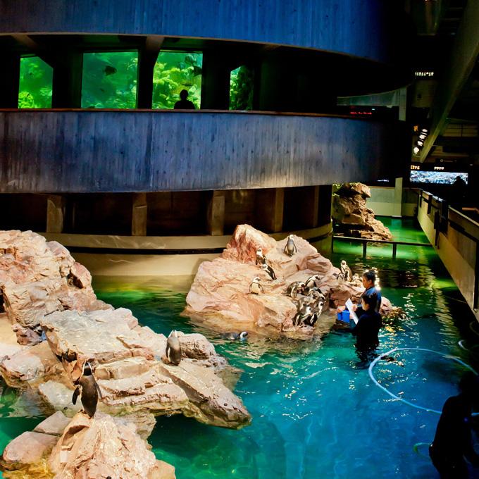 Visit New England Aquarium