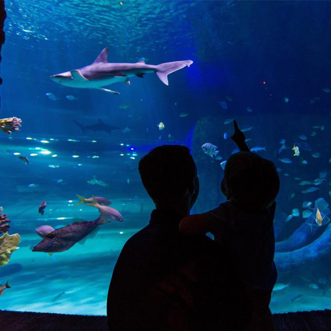 Visit Sea Life Aquarium in Orlando