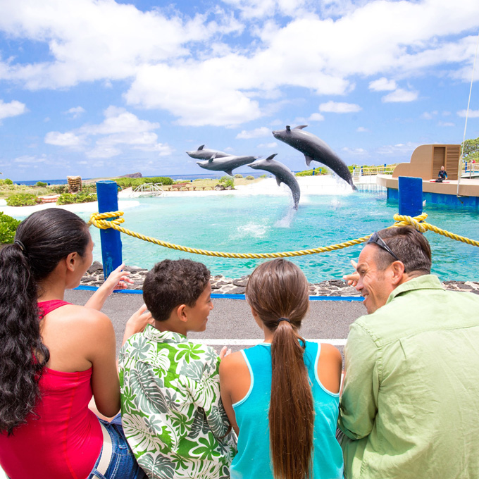 Visit the Sea Life Park in Hawaii