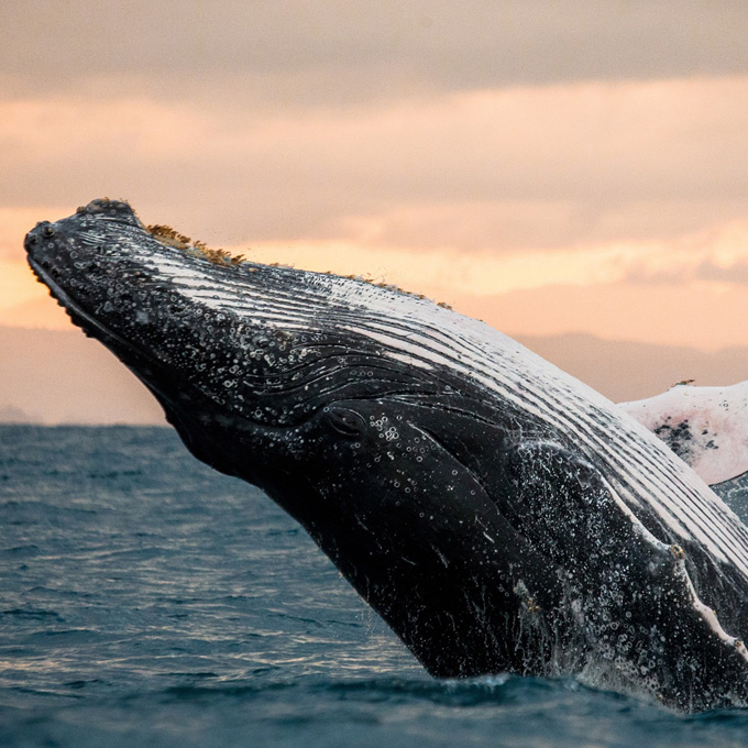 Whale Watching Cruise - San Diego, California