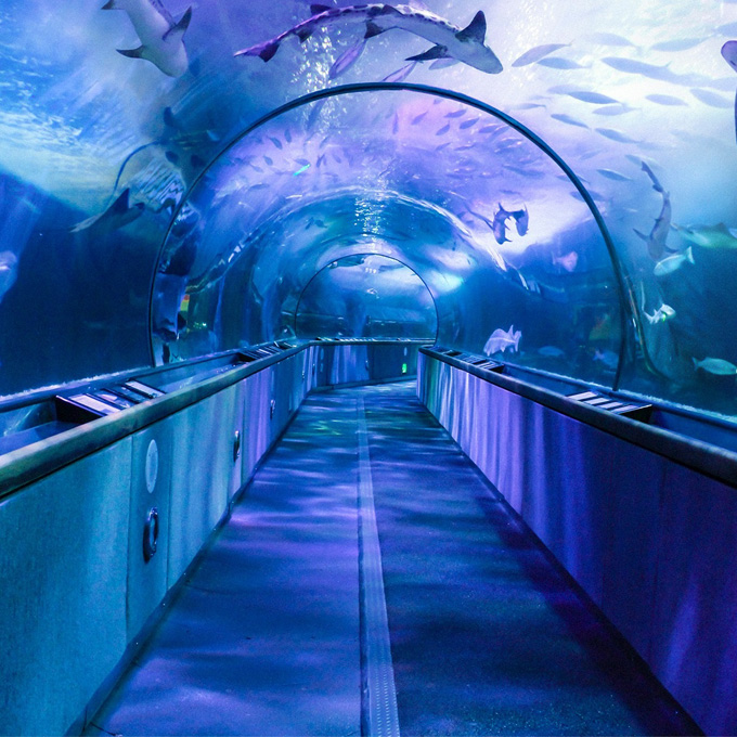 Visit Aquarium of the Bay in California