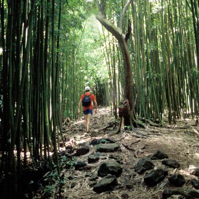 Hana Sightseeing, Hiking and Waterfalls