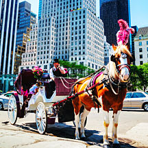 Ride a Carriage in NYC