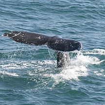 San Diego Whale Watching Cruise