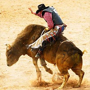 Bull Riding School in Houston