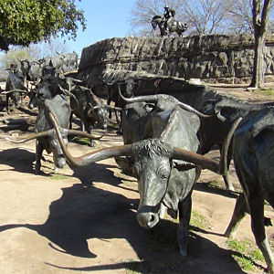 Cattle Drive Statue during Dallas Tour