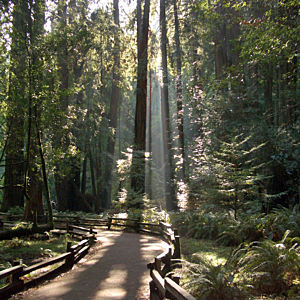 Muir Woods Tour in San Francisco
