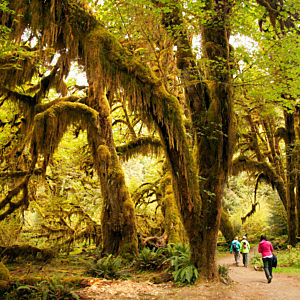 Visit the Hoh Rainforest on Multi-Day Tour