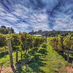 Learn about Wine in Northern Virginia