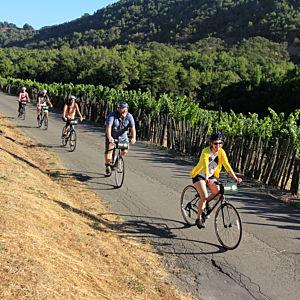 Sonoma Wine Tour
