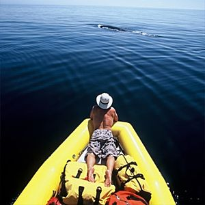 Whale Watching & Sightseeing in San Diego