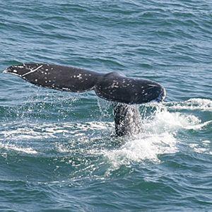 San Diego Whale Watching Cruise