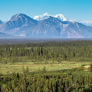 Denali Highway Jeep Tour in Alaska