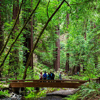 Redwoods & Wine Country Tour