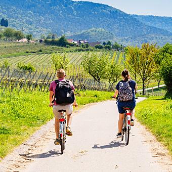 Bike and Wine in Sonoma