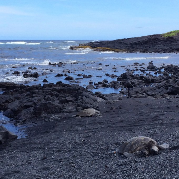 Turtles on Big Island Sightseeing Tour