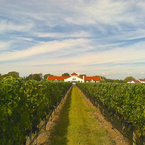 Vineyard Tour of the North Fork