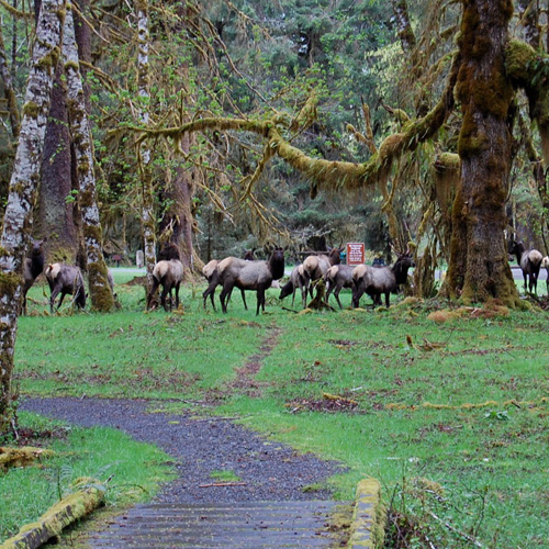 olympic-national-park-tour-wildlife
