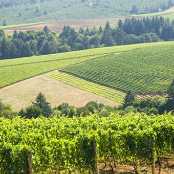 Wine Country Helicopter Tour near Portland