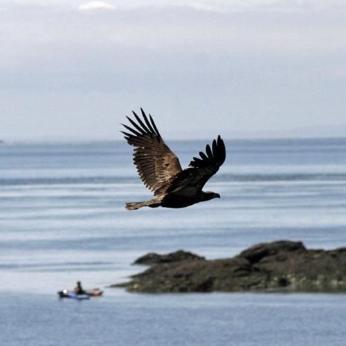 Eagle and Kayak Tour of San Juan Islands in Seattle