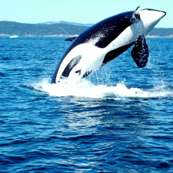 Whale Watching Tour in Seattle
