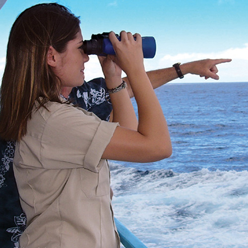Whale Watching Tour in Oahu